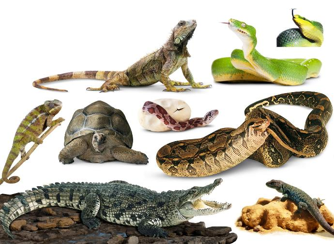 Which of these types of Reptiles is your favorite?