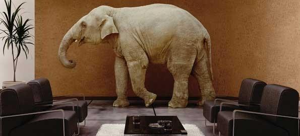 How often do you avoid the 'Elephant in the Room'?