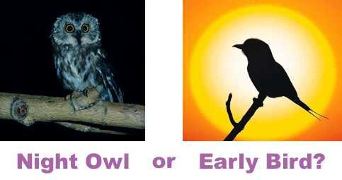 Which are you : Night Owl or Early Bird?