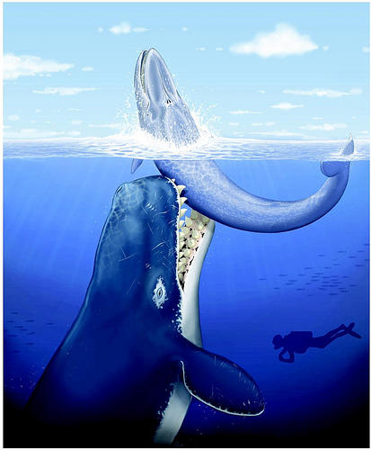 Question for anyone who's interested in paleontology, should Nat Geo, Discovery, or BBC make a documentary about the Leviathan Whale?