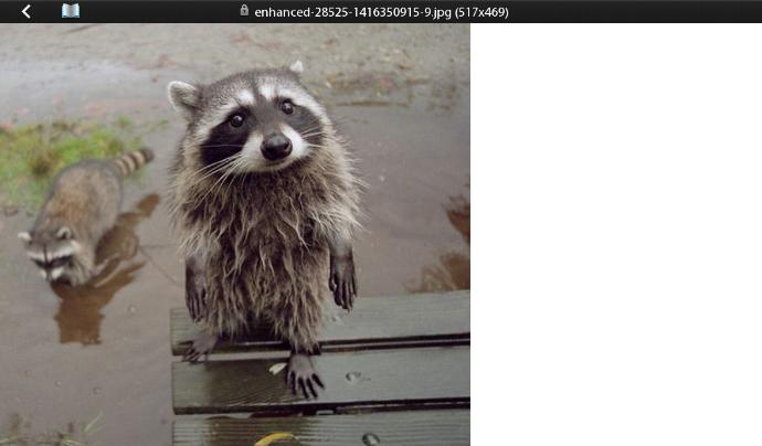 What Are Your Thoughts About Raccoons (:?