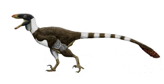 What kind of Dromaeosaur do you think the