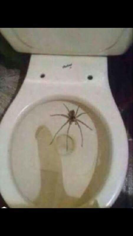 Damn guys, dont you hate spiders in your toilet?