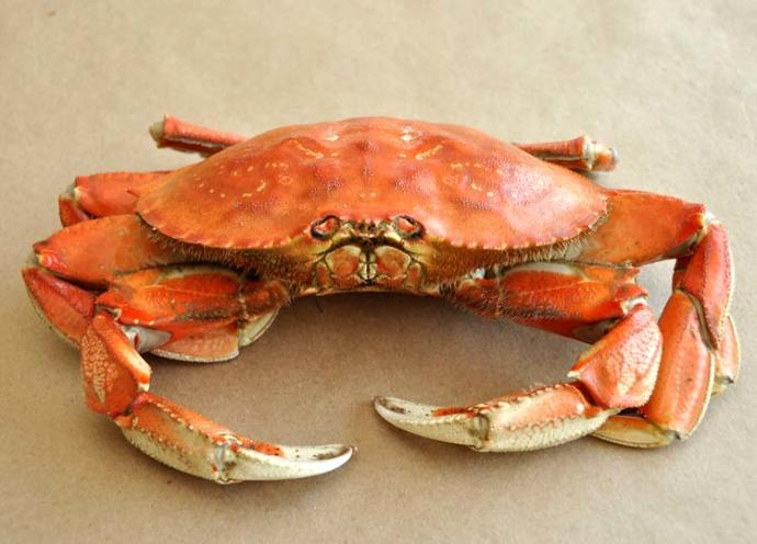 what is the best crab to eat or wich do u prefer ?