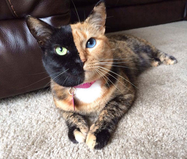 Would you want a cat that looked like this?