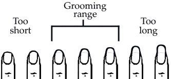 Guys, Do You Like Long OR Short Nails on Girls?