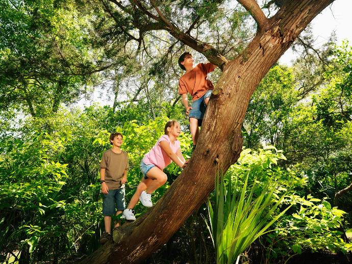 When Was The Last Time You Climbed A Tree?