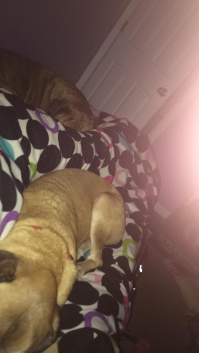 Where do your pets sleep?