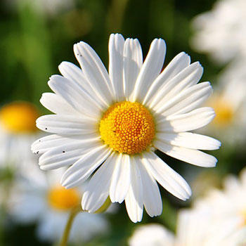 What is your favorite type of flower?