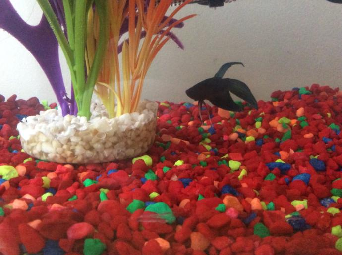 Name suggestions for my fish?