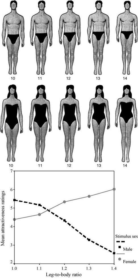 Do you prefer long torso, short torso or Short torso, long legs in your SO?