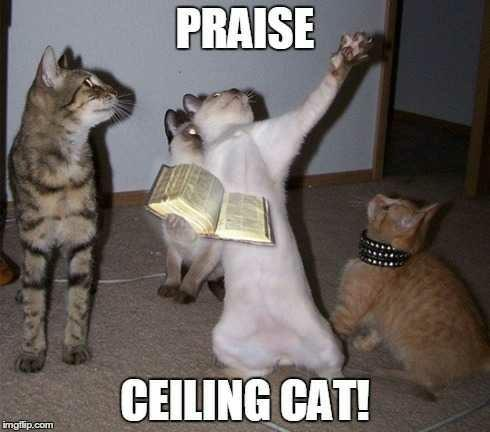 Ceiling Cat or Basement Cat? & Whose side are you on? Ceiling Cat or Basement Cat? - GirlsAskGuys