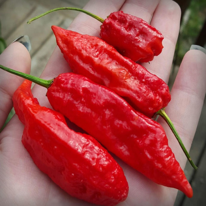 Have you ever had a Ghost Pepper before? if not, would you try it?