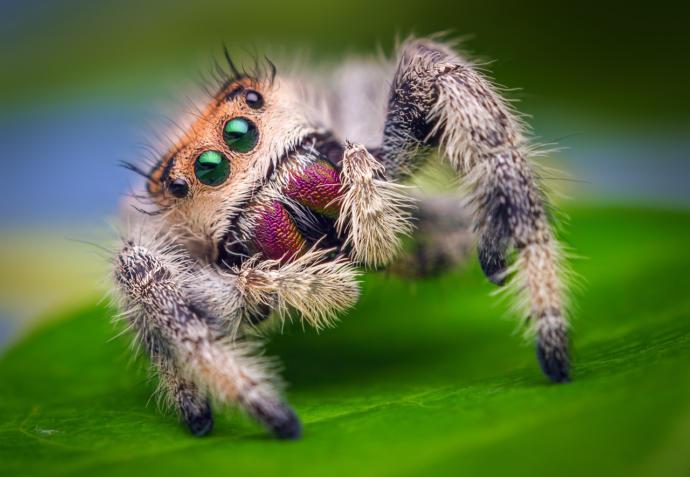 Do you think tarantulas are cute?