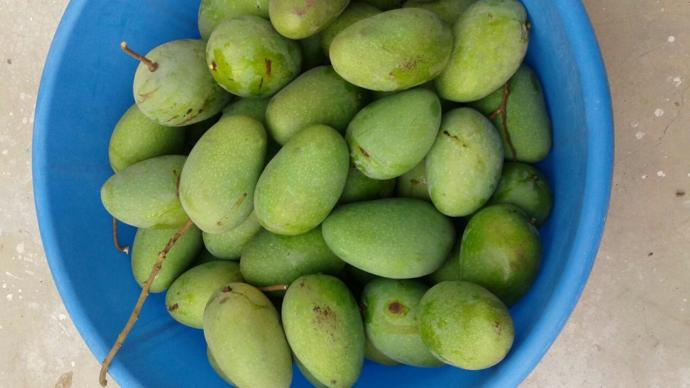Share your opinions about Mangoes or any other fruit you love <3?