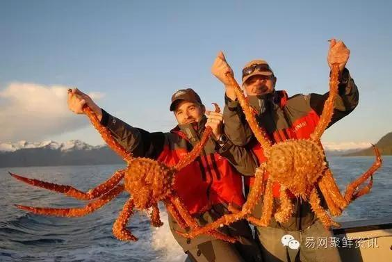 King crab VS Lobster, which do you like the most?