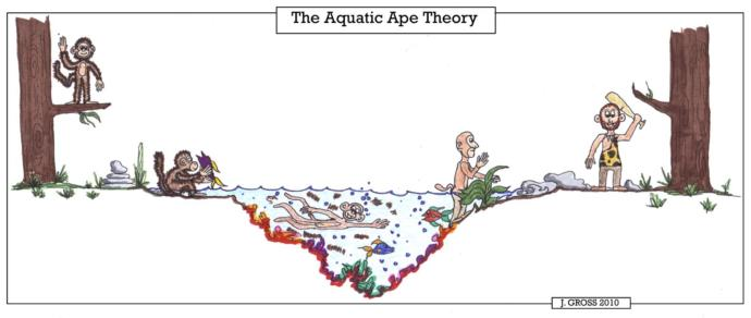 Aquatic Ape Theory or Semi-Aquatic Human Ancestor Theory?