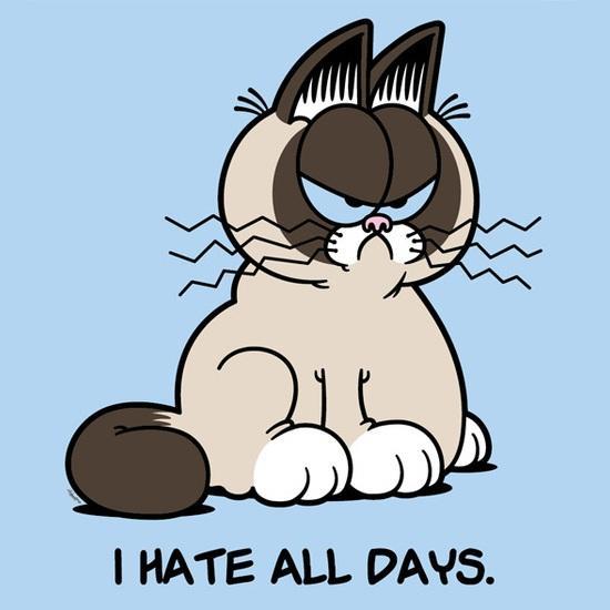Grumpy Cat or Garfield?