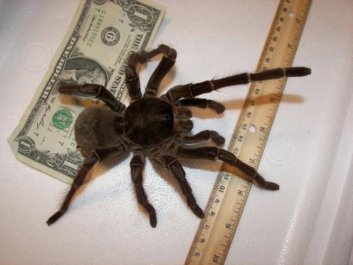 Whos more afraid of Spiders? Men or women?