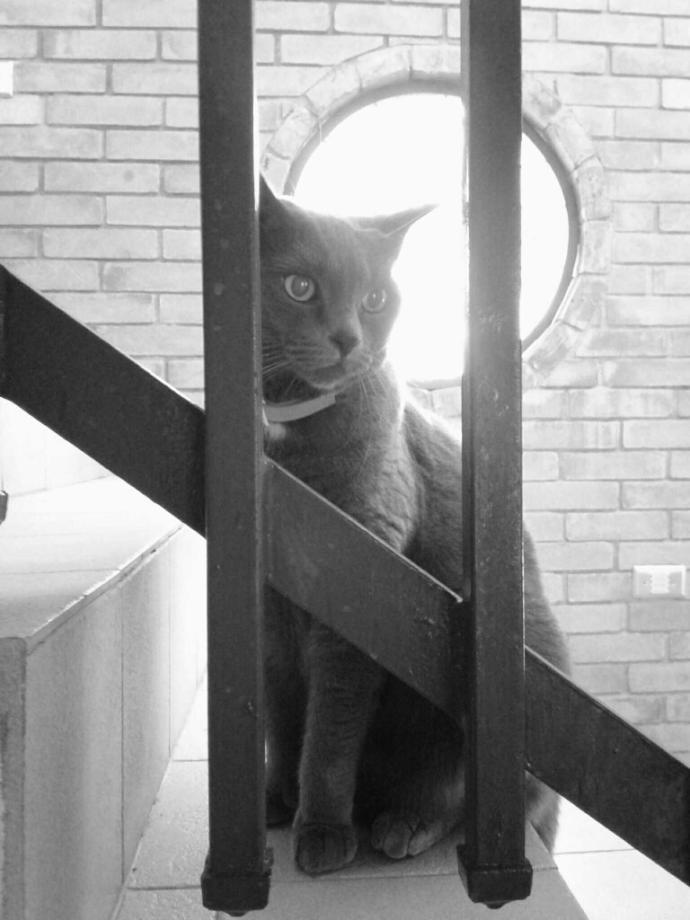 What's inside a cat soul?👁👁?