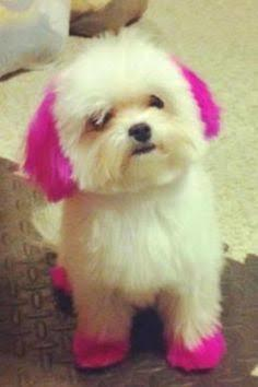 What colour should I dye my dog?