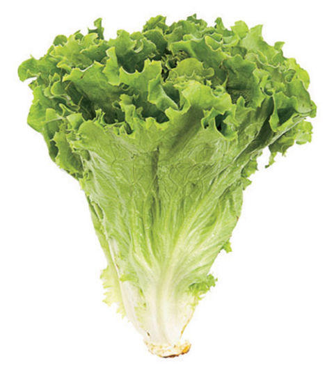 Cabbage or lettuce?