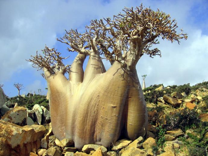 Does anyone know/heard of Socotra Island? (pics) Would you like to visit it?