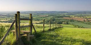 Would you prefer to live in the city or the countryside?
