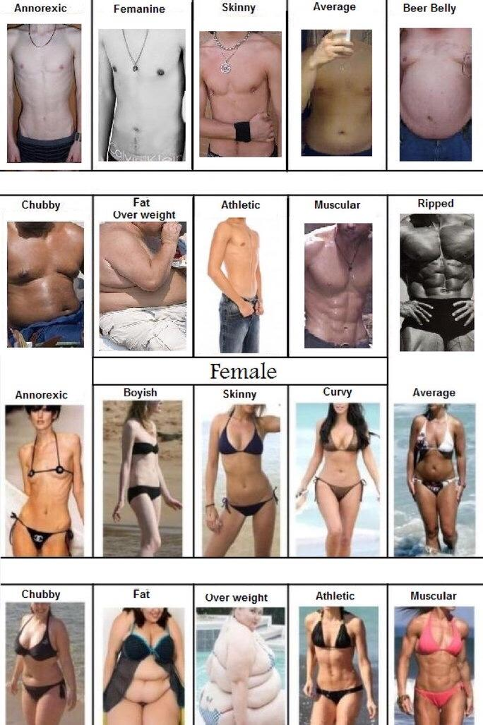 What is your ideal partners body type ?