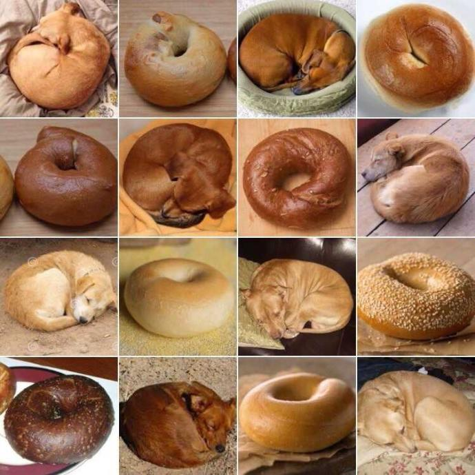 What's your favorite bagel flavor??