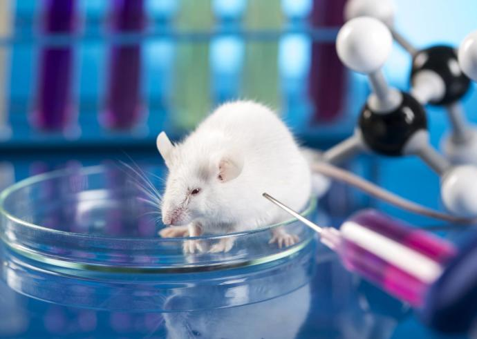 Should We Continue The Use Of Animals for Scientific or Commercial Testing?