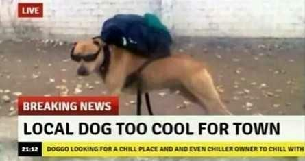 Is this dog too cool for you??
