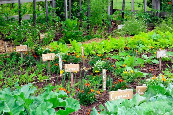 How to start a garden?