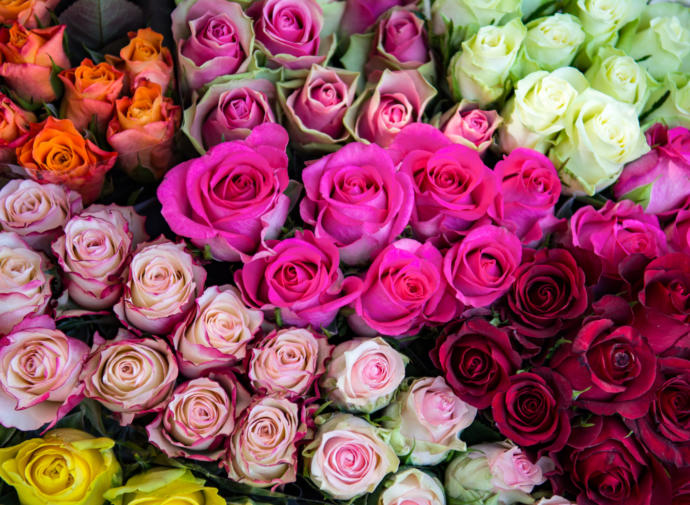 Should I send Roses to my ex-wife for Valentines Day? No, ulterior motive, out of respect for nearly 21 years of marriage & three brilliant children?