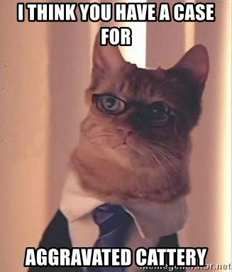 How would you feel if you were accused of a crime and Lawyer Cat was assigned to represent you?