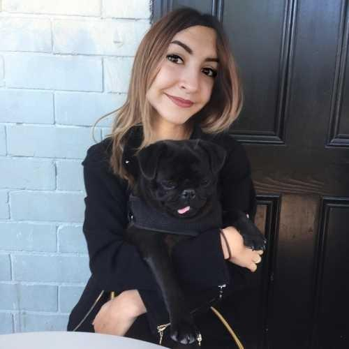 Do you like my pugs?