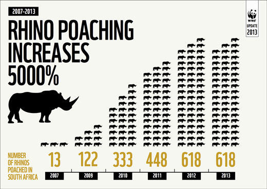 What would you do if you inherited 120 year old ivory snooker balls made from the now extinct white rhino?