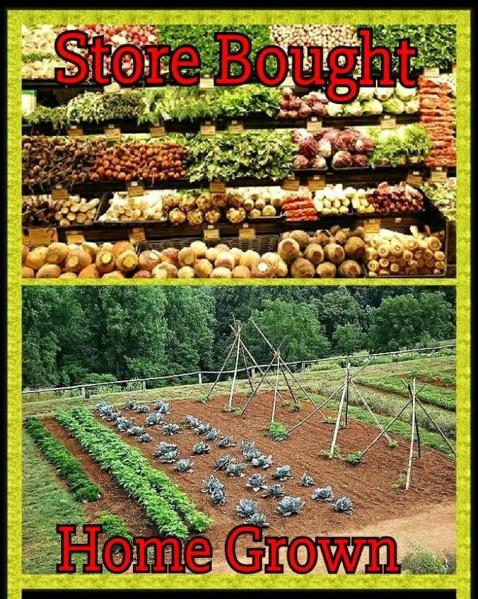 Do you prefer Homegrown or Store Bought vegables??
