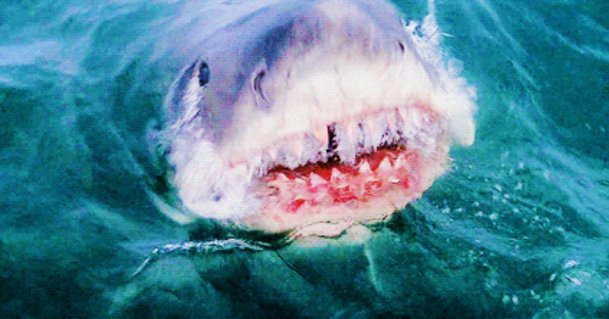 Гифка акула нападает