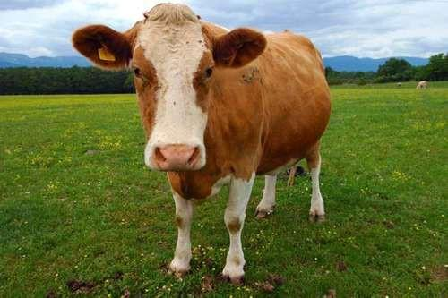 Would vegans/vegeterian consider 'clean-meat' ethical??