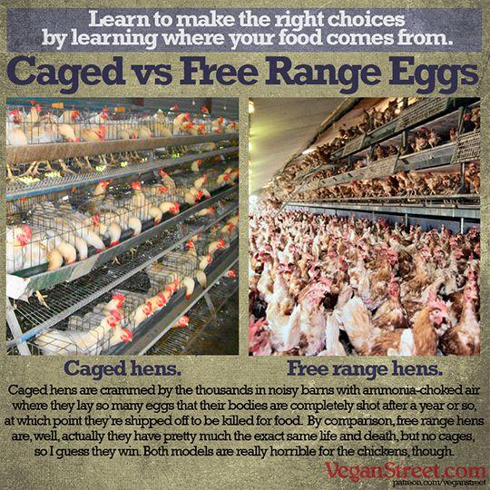 Cage vs. free-range eggs: Which do you buy & why?