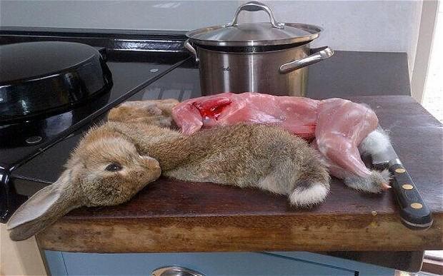 Ever eaten Rabbit?