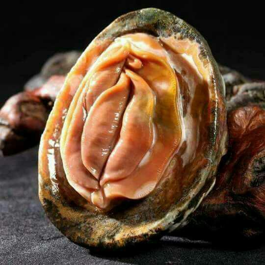 Would your eat these seashells? What do you think of these seashells? What do they look like?