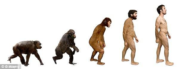 Are humans animals, grown apes?