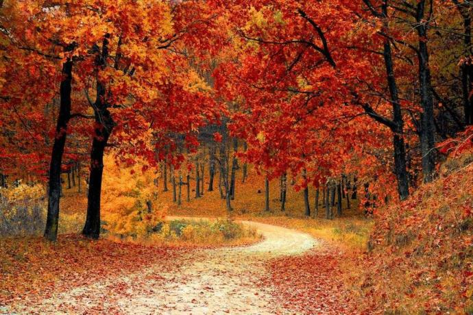 What are three things about Autumn/Fall that you enjoy?