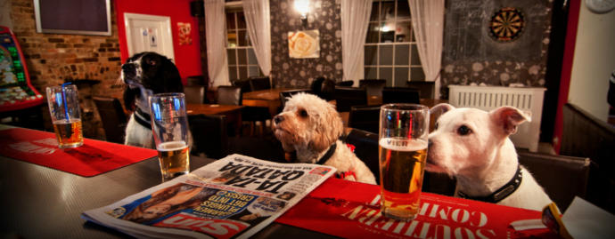 Do you believe that dogs should be allowed in pubs and restaurants?