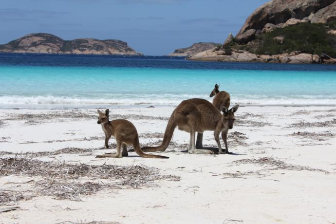 Which state in Australia would you most like to visit?