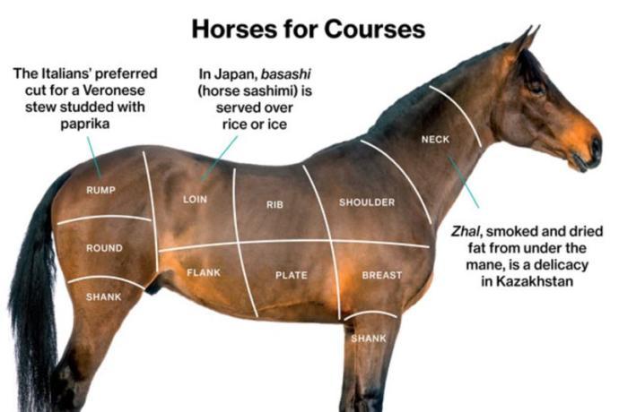 Do you like horse?