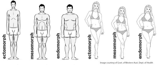 What body type do you find most attractive?
