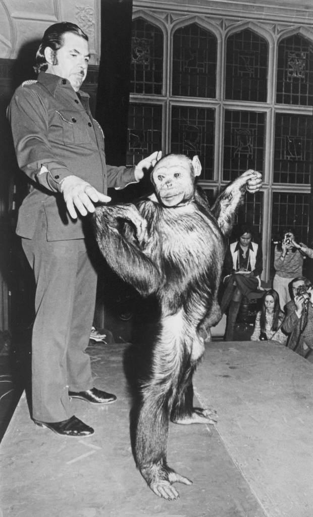 Oliver, the 'Humanzee'